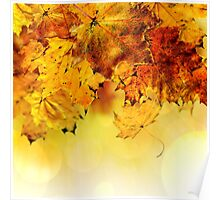 Fall maple leaves 4 Poster