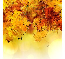 Fall maple leaves 4 Photographic Print