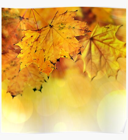 Fall maple leaves 2 Poster