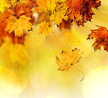 Fall maple leaves 3 by AnnArtshock