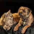 Border Terrier With Maine Coon Cat by Moonlake