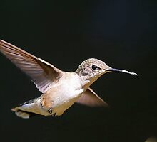 Hummer!! by jozi1