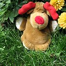 Pooch (our doorstop) in Our Garden in Romania by Dennis Melling