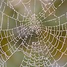 web  by marxbrothers