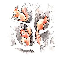 Squirrels, forest animals, watercolor & ink sketch Photographic Print