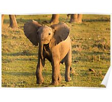 Cheeky Elephant Poster