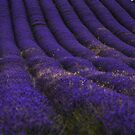Hills of Lavender by Sparowsong