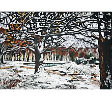 Winter landscape with oak trees in a park Photographic Print