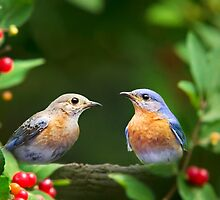 Pair of Bluebirds by Christina Rollo