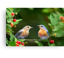 Pair of Bluebirds Canvas Print