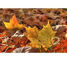 Fallen Leaves VI Photographic Print