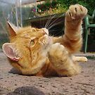 Ginger cat playing on patio by turniptowers