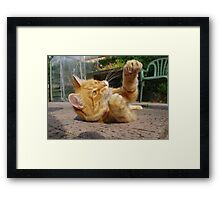 Ginger cat playing on patio Framed Print