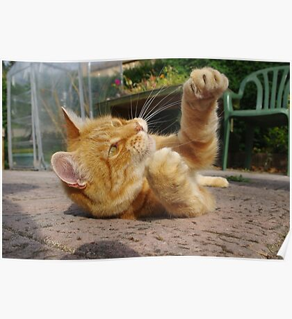 Ginger cat playing on patio Poster