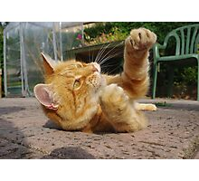 Ginger cat playing on patio Photographic Print