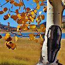 Aspen by JoAnn Glennie