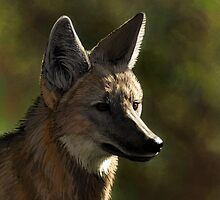 Maned Wolf by Gaia Sorrentino