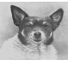 A Dog Named Boo Photographic Print