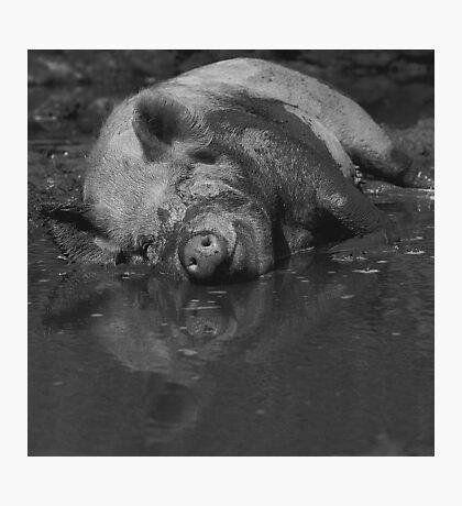 Happy pig - photograph Photographic Print