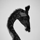 AFRICAN WILDLIFE IN MONOCHROME by Shannon Wild