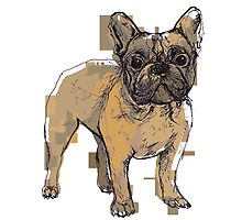 Theo the French Bulldog by KatHassell
