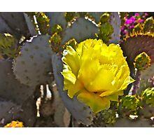 """Santa Rita Cactus Bloom"" Photographic Print"