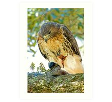 Red Tailed Hawk Art Print