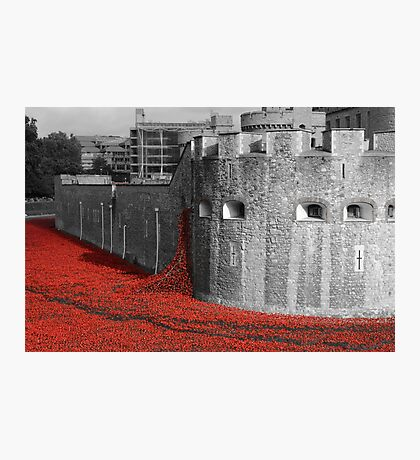 Tower Poppies Photographic Print