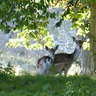 Hiding in the trees.... by wigs