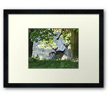 Hiding in the trees.... Framed Print