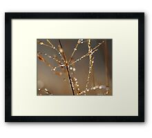 natures gems.... Framed Print