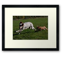 Charlie chasing Pearl  Framed Print