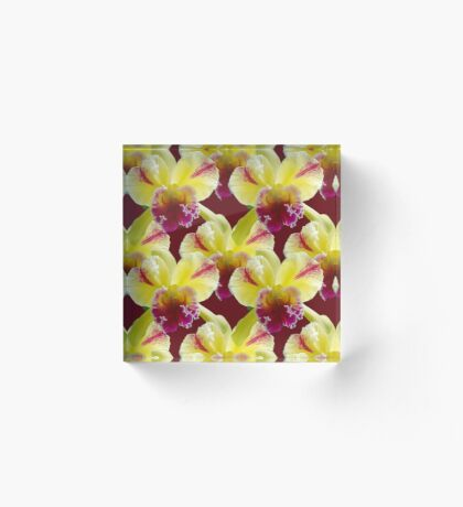 Natural Blooming Flowers - Yellow and Violet Cattley Orchids Acrylic Block