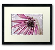 Pink Gazania Framed Print