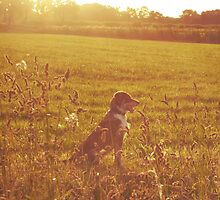 A Dog in a Field by aviva brooke