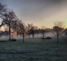 Frosty morning on Wray Common, Reigate, Surrey by AngieSurrey