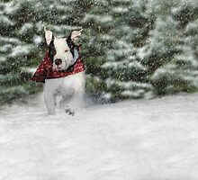 Snow Day by Shelley Neff