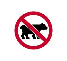 No bears Photographic Print