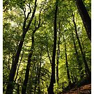 In the forest - Rhineland-Palatinate by Ronny Falkenstein