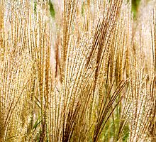 Fall Grass Abstract by Christina Rollo