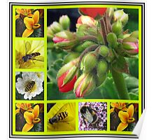 Biology Lesson - The Buds And  The Bees Collage Poster