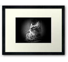 More Whiskers Than Kitten Framed Print