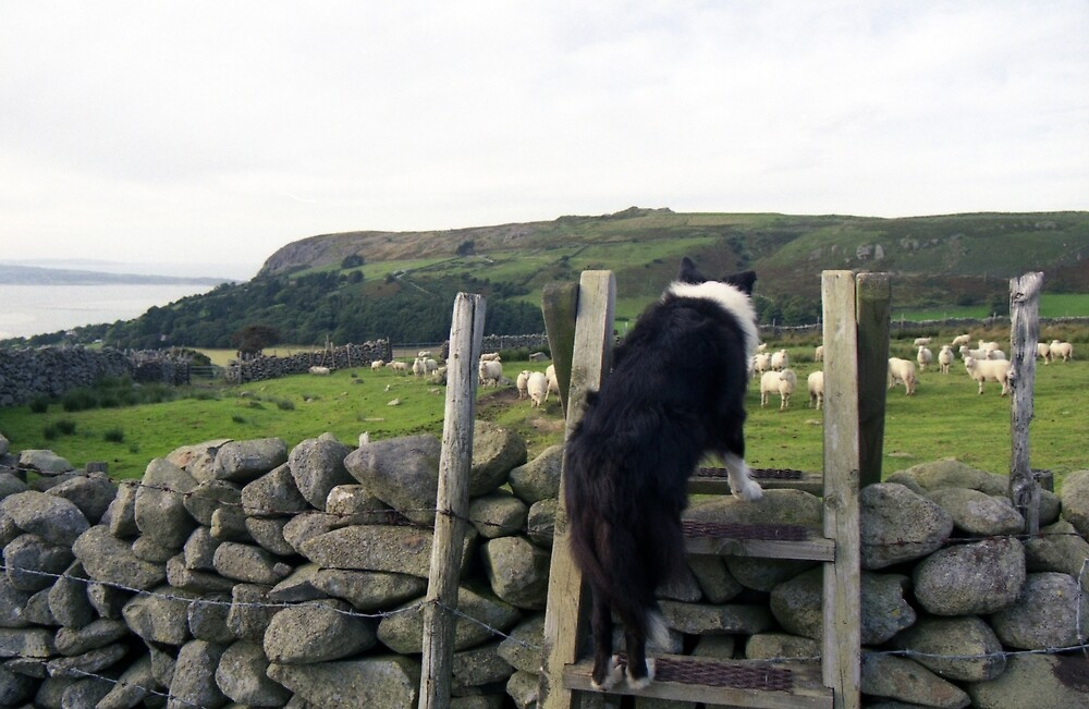 Life in the Old Dog yet by Michael Haslam