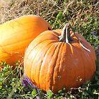 Pumpkin by Melissa Delaney