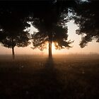 a sunrise in the forest  by leras
