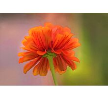 Saying Goodbye to Summer Flowers Photographic Print
