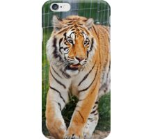 Rescued Siberian Tiger iPhone Case/Skin