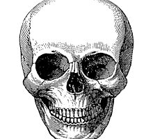 Classic Vintage Skull by cartoon