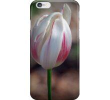 Tulip Satina By Lorraine McCarthy iPhone Case/Skin