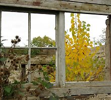 Tired old broken window by Gillian Marshall